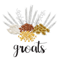 cereals and grains vector image