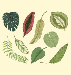 tropical or exotic leaves leaf of different vector image