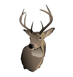 Whitetailed Deer Buck vector image