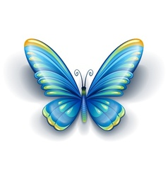 Blue butterfly with color vector
