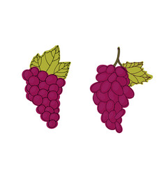 cluster of red grapes vector image
