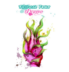 dragon fruit watercolor delicious colorful vector image