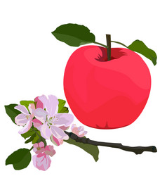 Red apple and branch in blossom flat vector