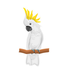 White cockatoo parrot on branch exotic bird with vector