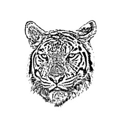 A tiger face on white background wild animals vector
