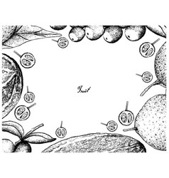 Hand drawn frame of fresh fruits on white backgrou vector