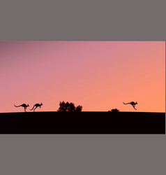 Silhouettes of kangaroos against the background vector