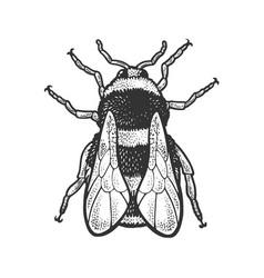 bumblebee bee insect sketch vector image