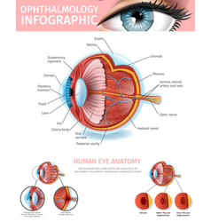 cross section of human eye medical aid banner vector image