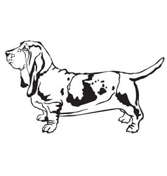 Decorative standing portrait of basset hound vector