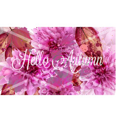 hello autumn pink daisy flowers banner vector image