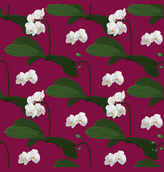 orchid seamless pattern vector image
