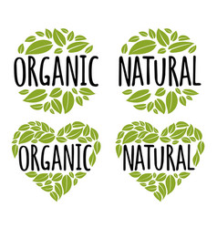 organic natural handwriting lettering with leaf vector image
