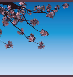 sakura flowers pink on branch vector image
