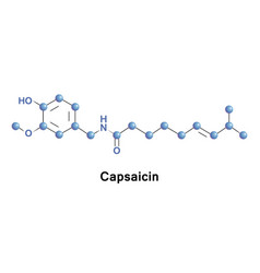 capsaicin is an active component of chili vector image vector image