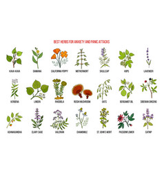 Best herbs for anxiety and panic attacks vector