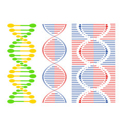 dna different sets of spirals vector image