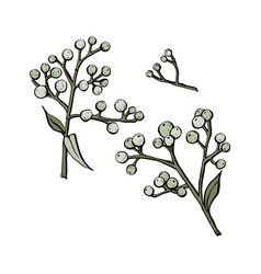 drawing herbs floral botanical vector image