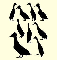 ducks animal silhouette vector image
