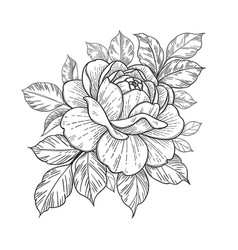 Hand drawn floral composition with rose and leaves vector