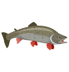 realistic trout on white background vector image vector image