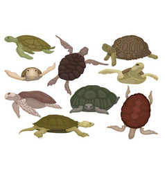 sea and land turtles set tortoise reptile animals vector image