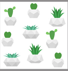 succulents seamless pattern white vector image