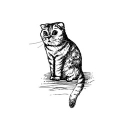 cute kitty sitting hand drawn sketch vector image