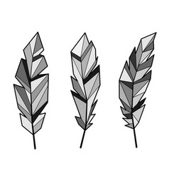 feathers gray set vector image