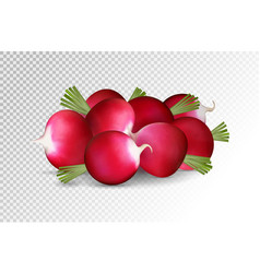 Grope of photo realistic radishes on a transparent vector