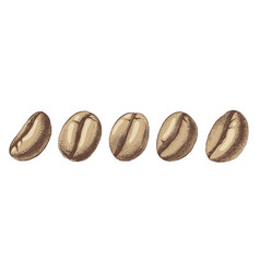 hand sketched coffee beans vector image