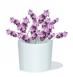 Lavender flowers in a white pot vector image