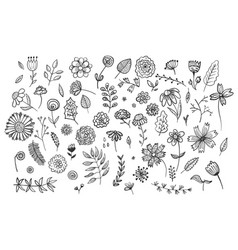 set of cute hand drawn ink flowers and herbs vector image
