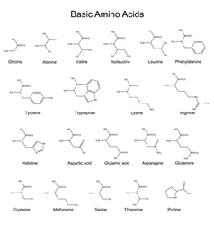 Chemical structures of basic amino acids vector image vector image