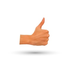photorealistic thumb-up hand isolated vector image vector image