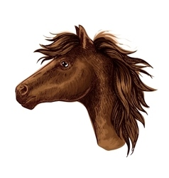 Brown arabian horse animal head vector image