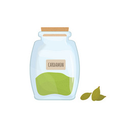 cardamon seeds stored in glass jar isolated on vector image