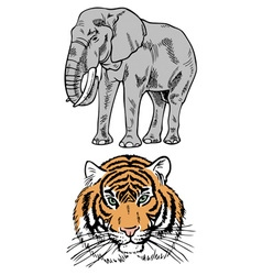 Elephant and tiger vector