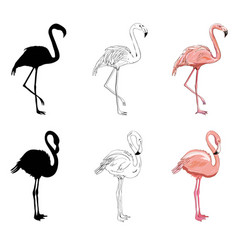 hand drawing flamingos vector image