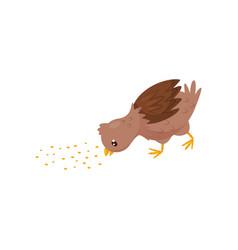 small brown chicken eating grain young farm bird vector image