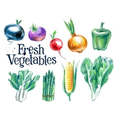 Vegetables logo design template fresh vector