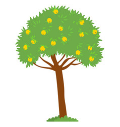 Apple tree with yellow fruits on top harvesting vector