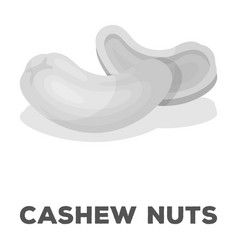 Cashew nutsdifferent kinds of nuts single icon in vector