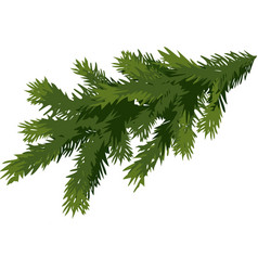 green spruce branch isolated on white background vector image