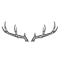 Hand drawn reindeer antlers vector