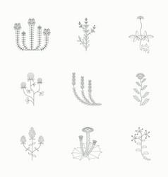 medicinal herbs icons set vector image