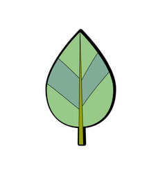 Natural leaf botany of tropical plant vector