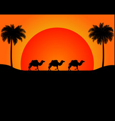 the silhouette of the marching camels in desert vector image