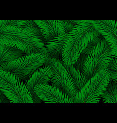 green fir tree branches design christmas vector image