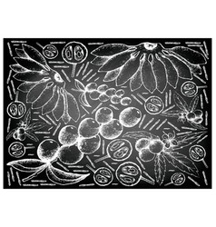Hand drawn of fresh fruits on chalkboard backgroun vector